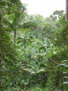 Tropischer-Regenwald